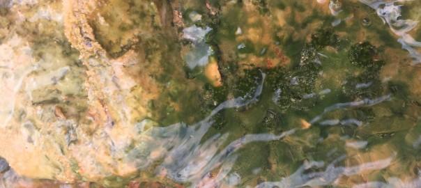Toskanische Algen